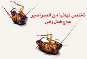 10 طرق فعالة للقضاء على الصراصير