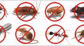 شركة مكافحة حشرات بمكة 0555899396