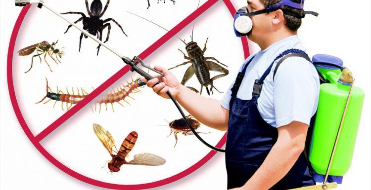 شركة مكافحة الحشرات بمكة 0555899396 بأرخص الاسعار