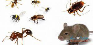 أفضل شركة مكافحة حشرات بمكة ورش مبيدات بمكة