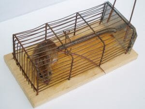 أفضل شركة مكافحة فئران بمكه